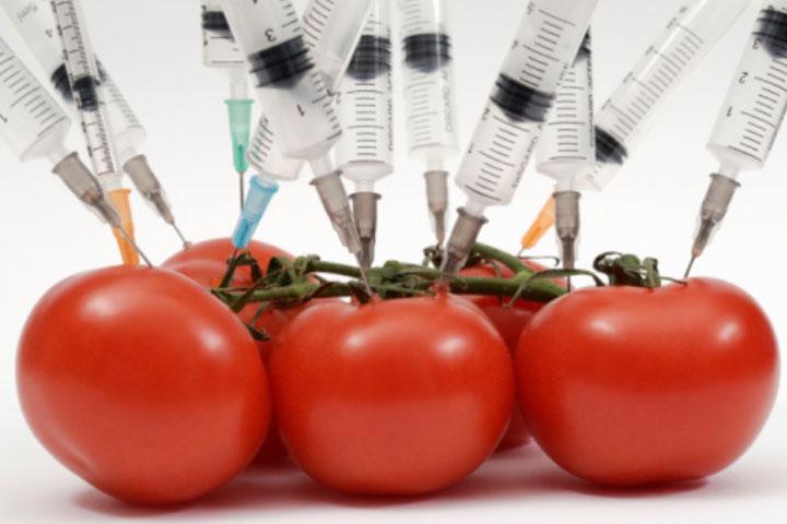 помидорыimpacto-de-aliementos-transgenicos