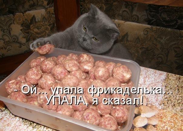 кот фрикаделька