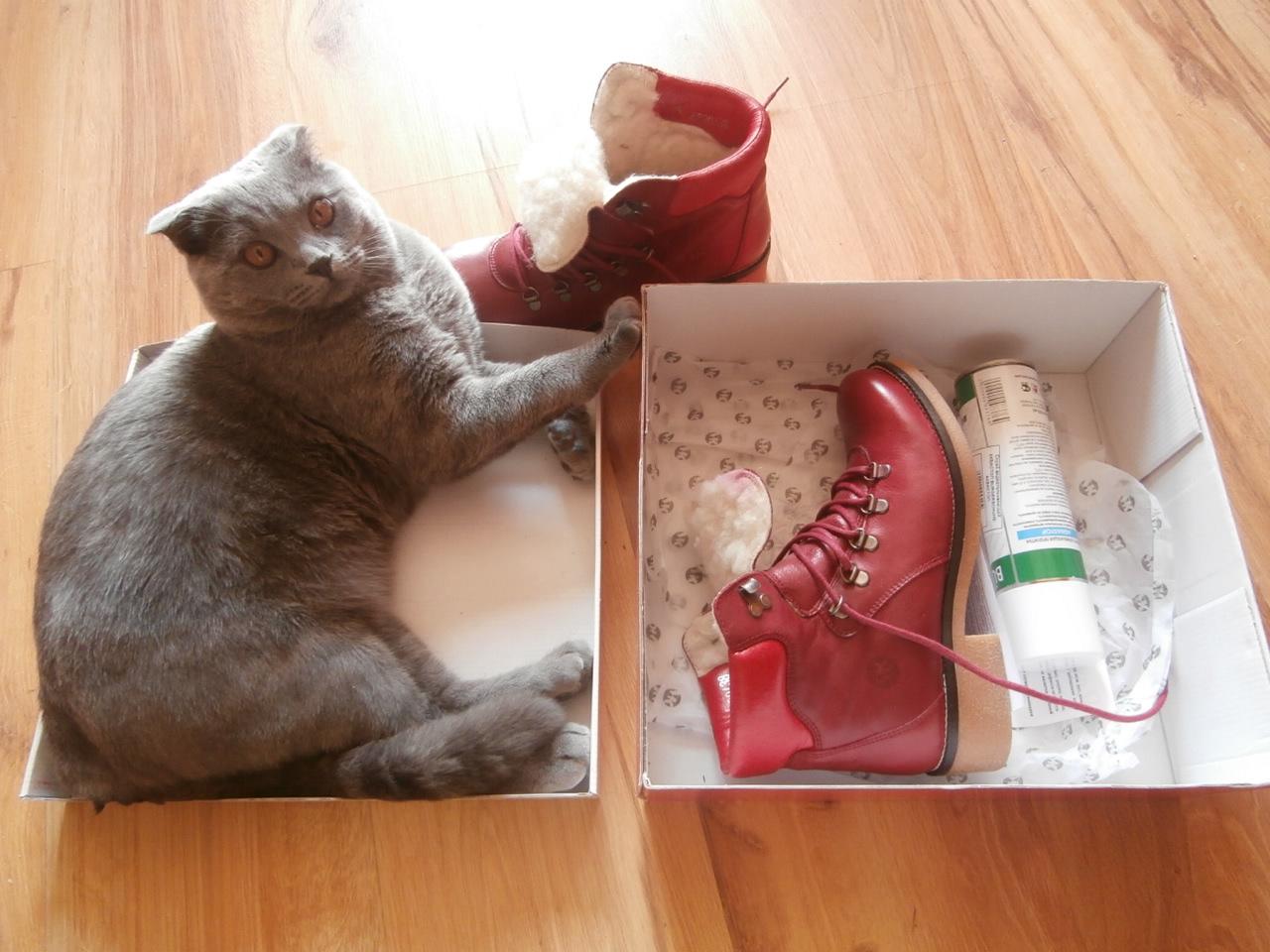 кот с коробкой