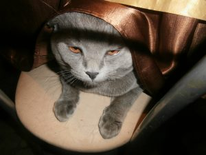 кот под столом