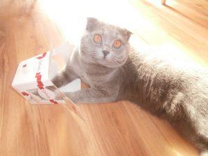 кот с коробочкой