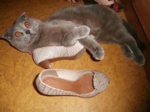 кот с обувью