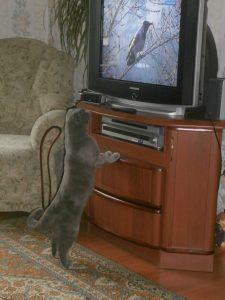 кот у телевизора