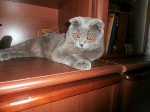 кот на полочке