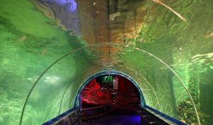 туннель для акул