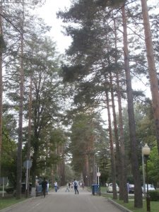 пешеходная часть улицы Ленина