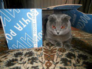 кот и коробочкой
