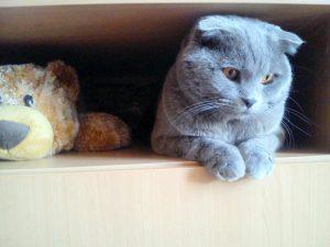 кот в тумбе