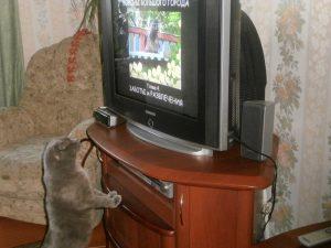 кот смотрит фильм о птицах