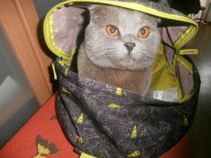 кот в рюкзаке