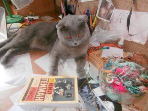 кот в беспорядке