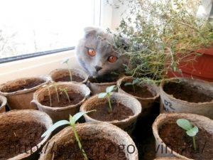 кот в рассаде