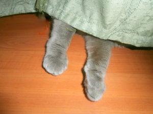 кот за шторой