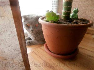 котик у балкона
