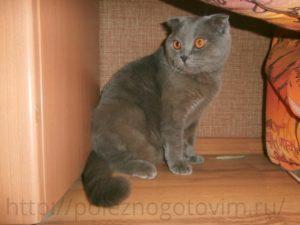 нашкодивший кот