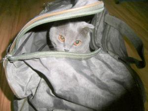 кот в дорожной сумке