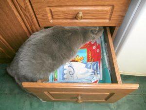 кот залезает в ящик