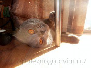 котик на солнышке