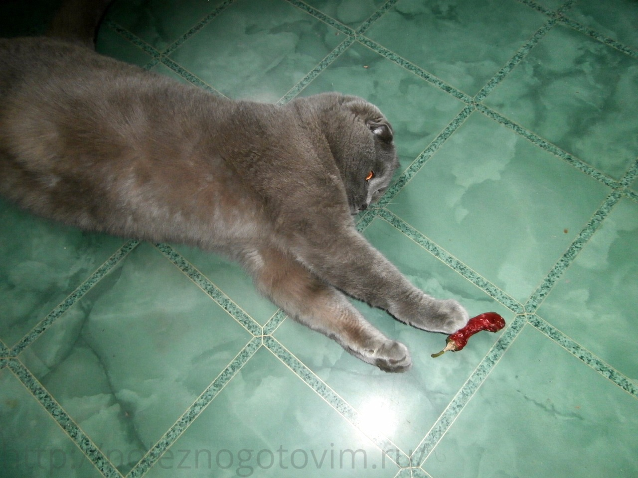 Натуральный дезодорант своими руками рецепт фото 563