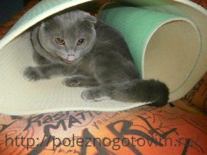 кот в коврике