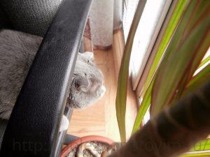 кот на стуле