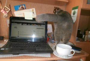 кот на столе