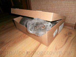 кот в обувной коробке