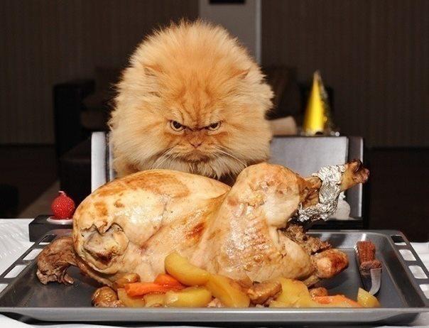 праздничное блюдо из курицы