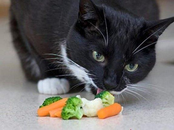 салат витаминный из капусты