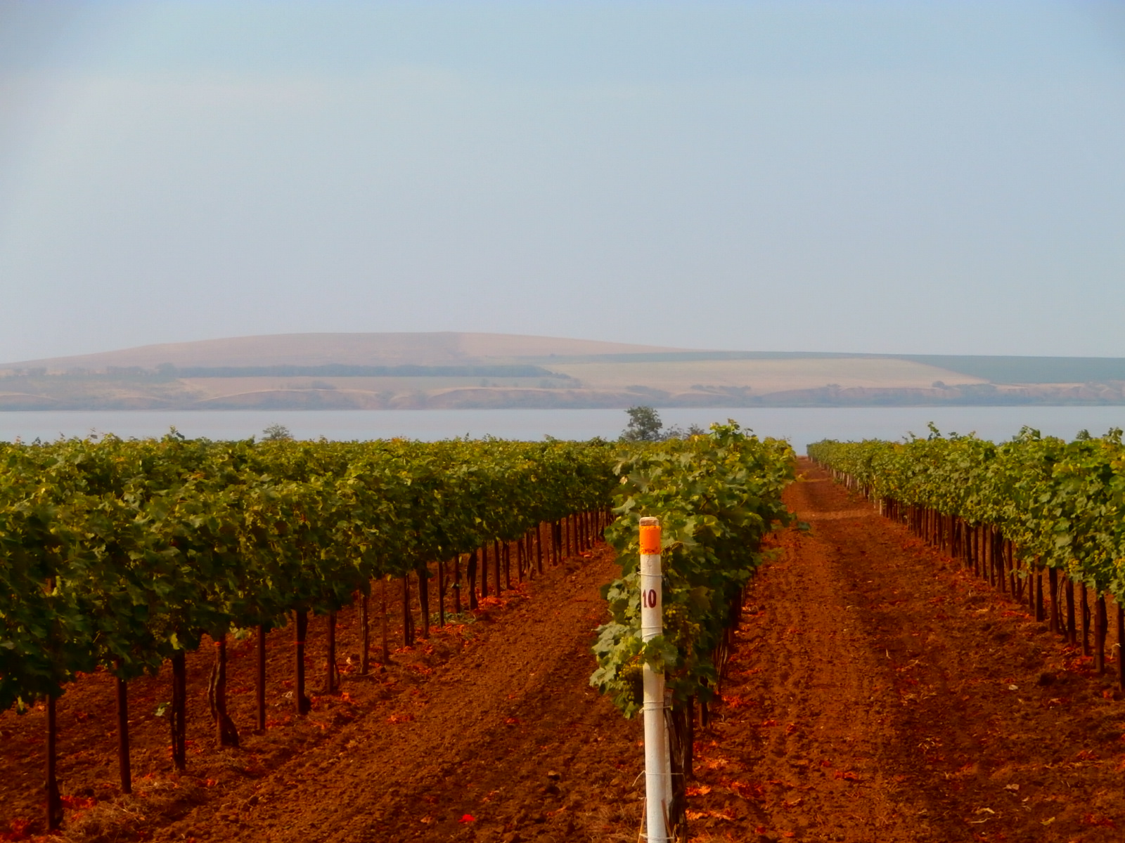 Бескрайние виноградники Тамани