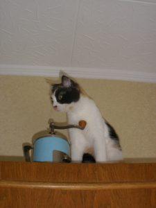кот на кухне