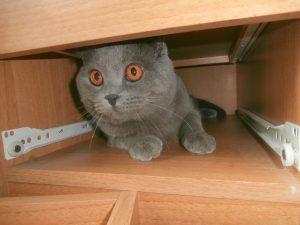 кот в столе