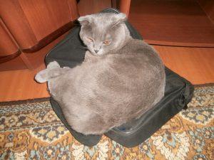 кот на сумке