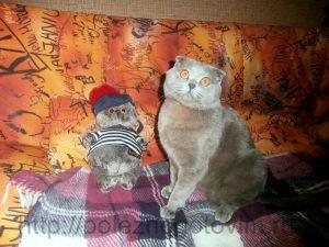 коты на диване