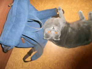 кот с рюкзаком