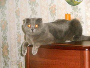 кот вместо свечки
