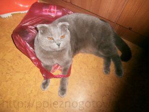 кот с пакетом