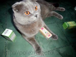 кот с валерианкой