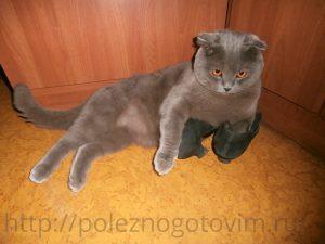 кот лежит на туфлях