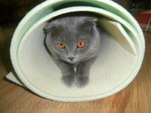 кот в коврике для фитнеса