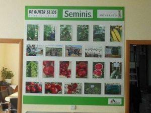ГМО семена