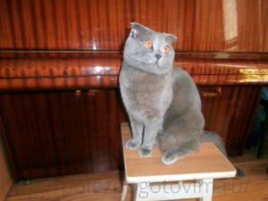 кот за пианино
