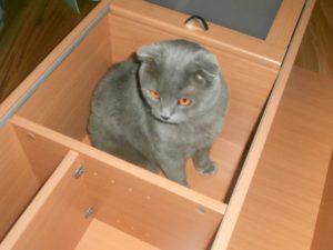 кот внутри полки