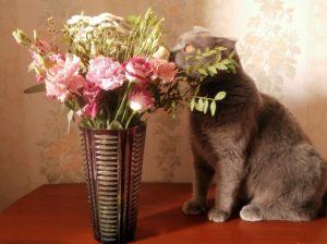 кот с цветами