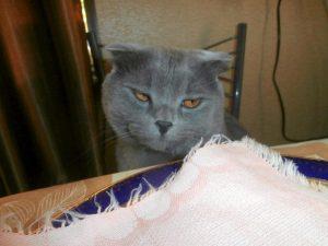 кот за столом