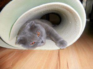 кот в трубе